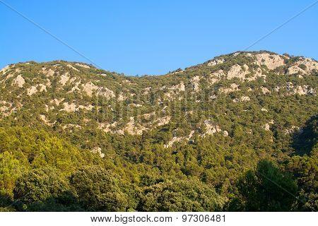 Rocky Landscape With Vegetation