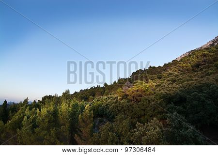 Natural Mountain Landscape With Vegetation