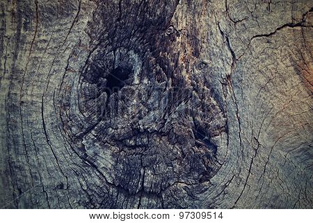 The texture of an old tree - cross section