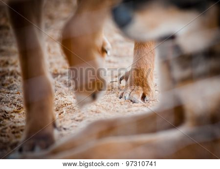 Dog In Shelter - Dewclaw Close Up In Focus