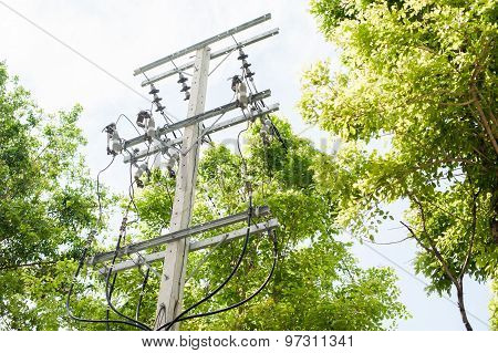 Electric pole among tree in hometown