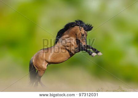 Wild Stallion Prancing