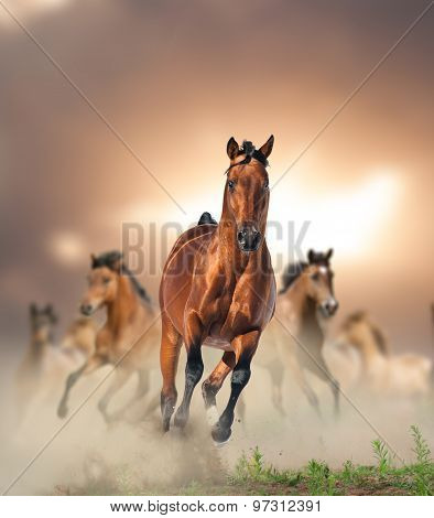 Herd Of Wild Bay Horses