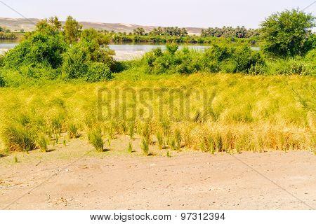 Landscape And The River Nile Suth Of Wadi Halfa In Sudan