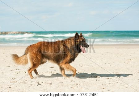 Dog And The Sea
