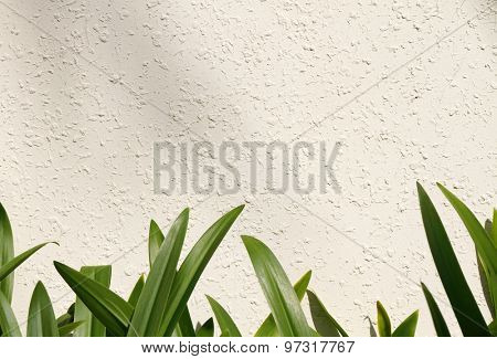 Leaf on white wall (amaryllis leaf)