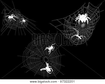 illustration with three webs with spiders isolated on black background