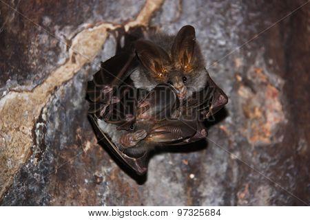 Small bat cave.