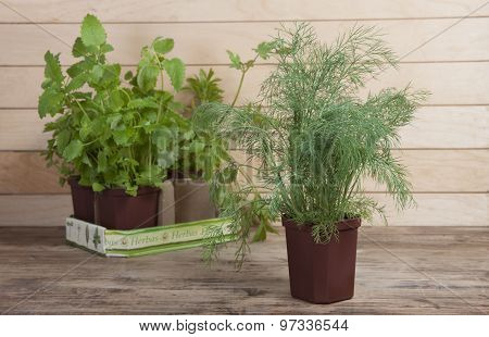Dill In A Pot And Other Spicy Plants In The Background.