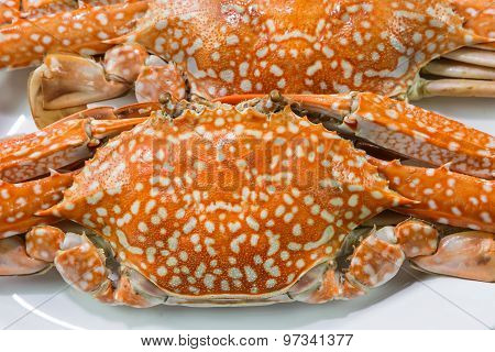 Streamed Blue Crabs ( Sand Crab )