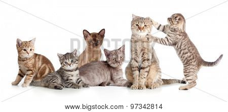 various cats group isolated