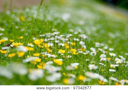 Little Yellow And White Flowers With Soft Effect