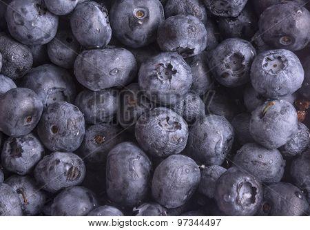 Berry Blueberry