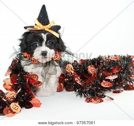 Halloween Puppy