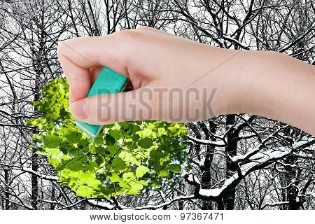 Hand Deletes Winter Woods By Rubber Eraser