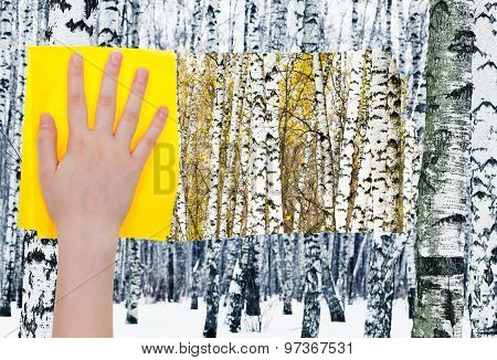 Hand Deletes Birches In Forest By Yellow Cloth