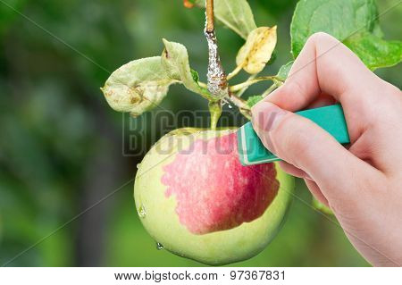 Hand Deletes Green Apple By Rubber Eraser