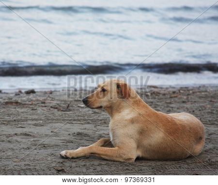 dog on the beach, summer time