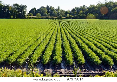 Rows On Green Plant