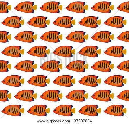 Flame Angelfish Pattern