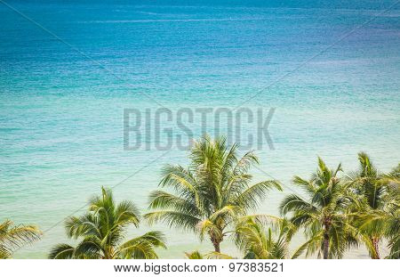 Palm tree with beautiful seascape  ( Filtered image processed vintage effect. )