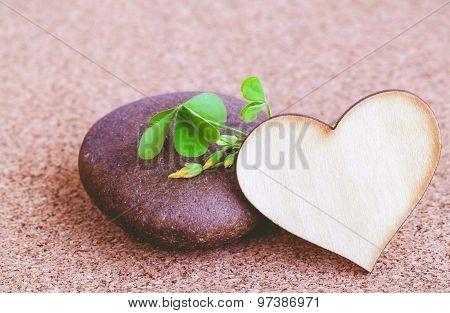 Close up Clover Leaf On Wooden Background.