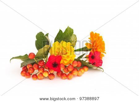 Viburnum Branch With Berries And Leaves  On A White Background