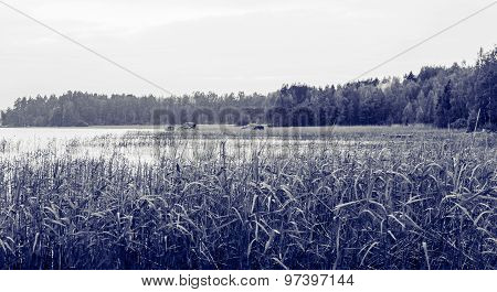 Evening Landscape At The Lake In Black And White