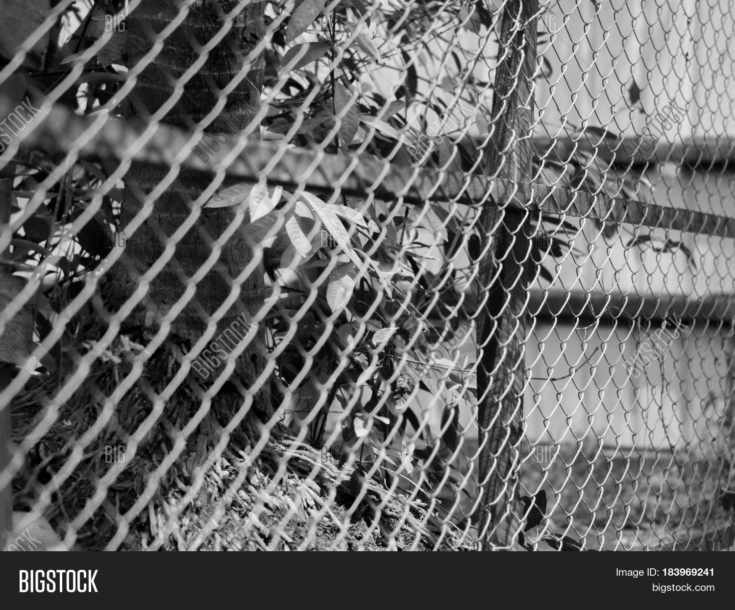 black and white photo of chainlink fence also referred to as wire netting
