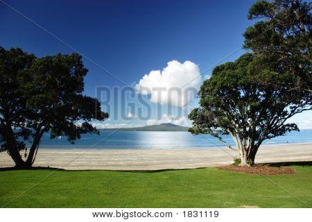 Rangitoto durch die Bäume
