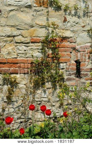Verlassene Wand mit Reben bedeckt