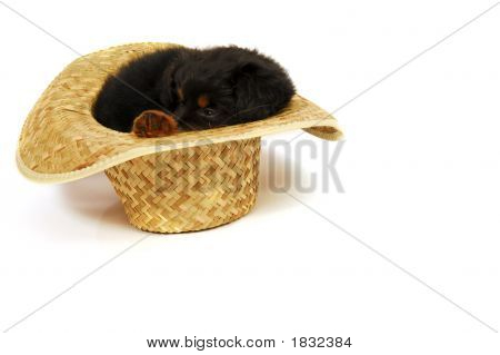 Puppy Dog In Cowboy Hat