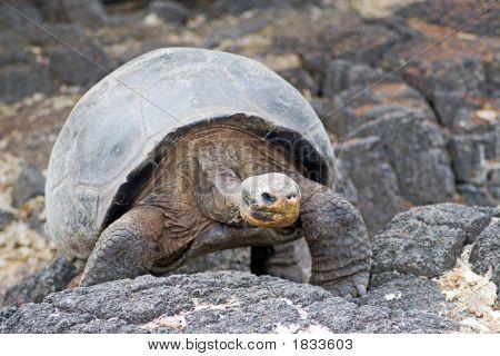 Galapagos_24