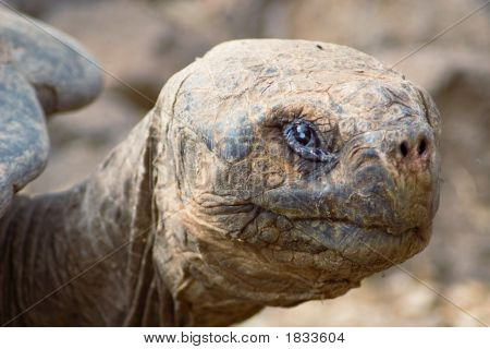 Galapagos_25