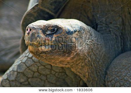 Galapagos_27