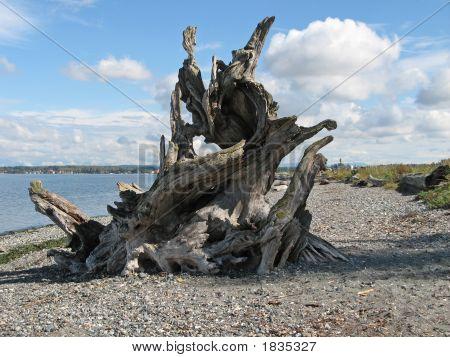 Dramatic Driftwood