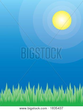 Green Grass On A Summer Day