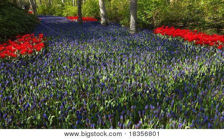 River Blue In Spring