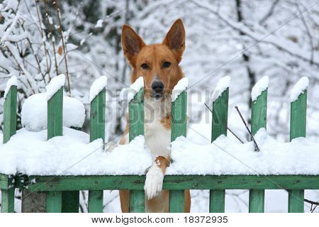 nice dog looking interested