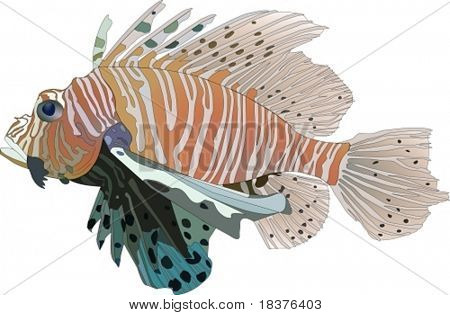 vector Red Lionfish (Pterois volitans)