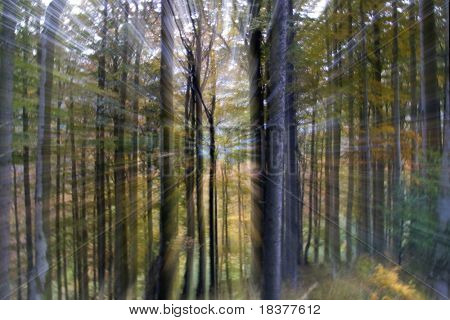 abstract light in coloured forest in autumn time
