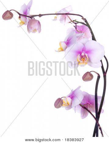 flower/background