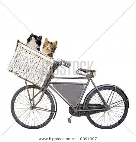 vintage rusty dutch old carrier bike with two cute young kittens in shopping basket isolated on white