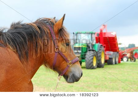 conceptual image of horsepower, with a real horse and modern tractor in the background