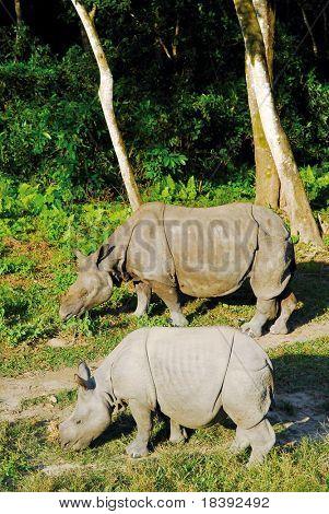2 rhino negro en Nepal del Parque Nacional de chitwan