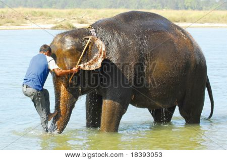 mounting an elephant (series: part 1 out of 5)