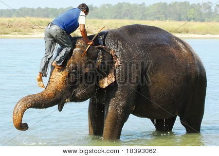 mounting an elephant (series: part 4 out of 5)