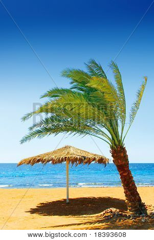 Palmtree and umbrella on tropical beach on sunny day