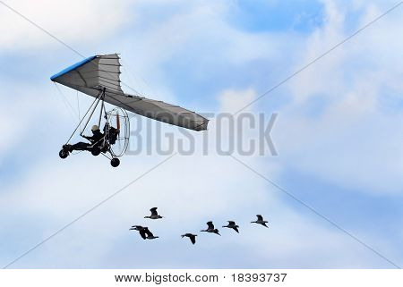 Flock of geese flying with their human friend in his ultra light airplane