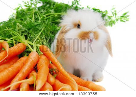 Cute white lop ear baby rabbit and carrots isolated on white